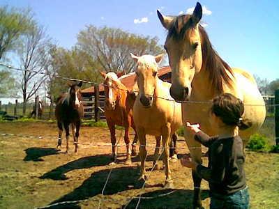 gracie mit pferd